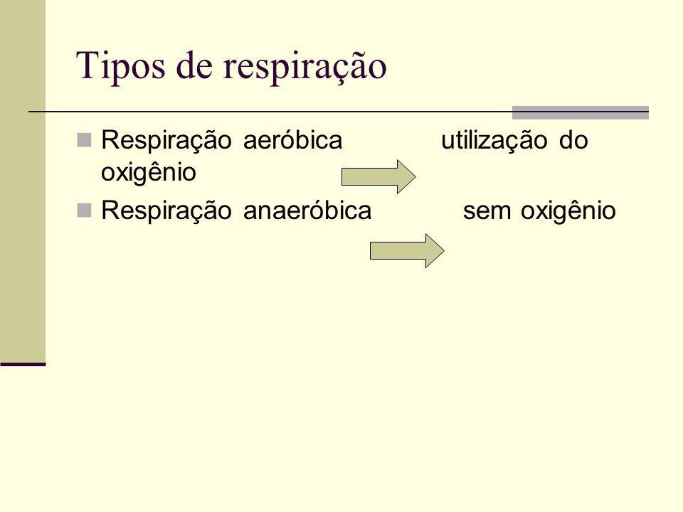Tipos de respiração Respiração aeróbica utilização do oxigênio Respiração anaeróbica sem oxigênio