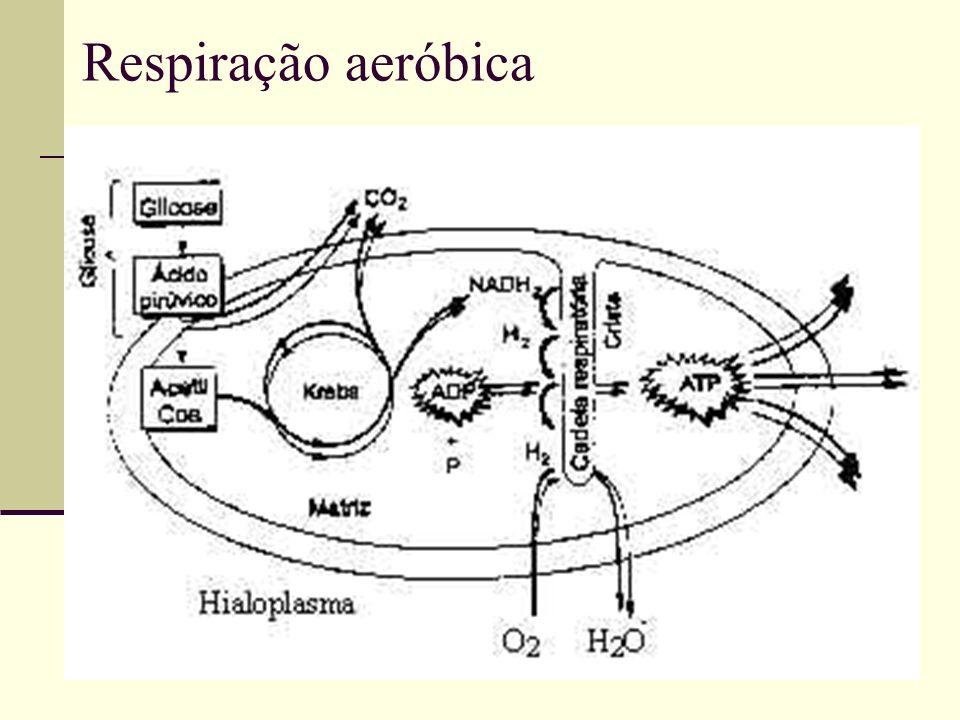 Respiração aeróbica