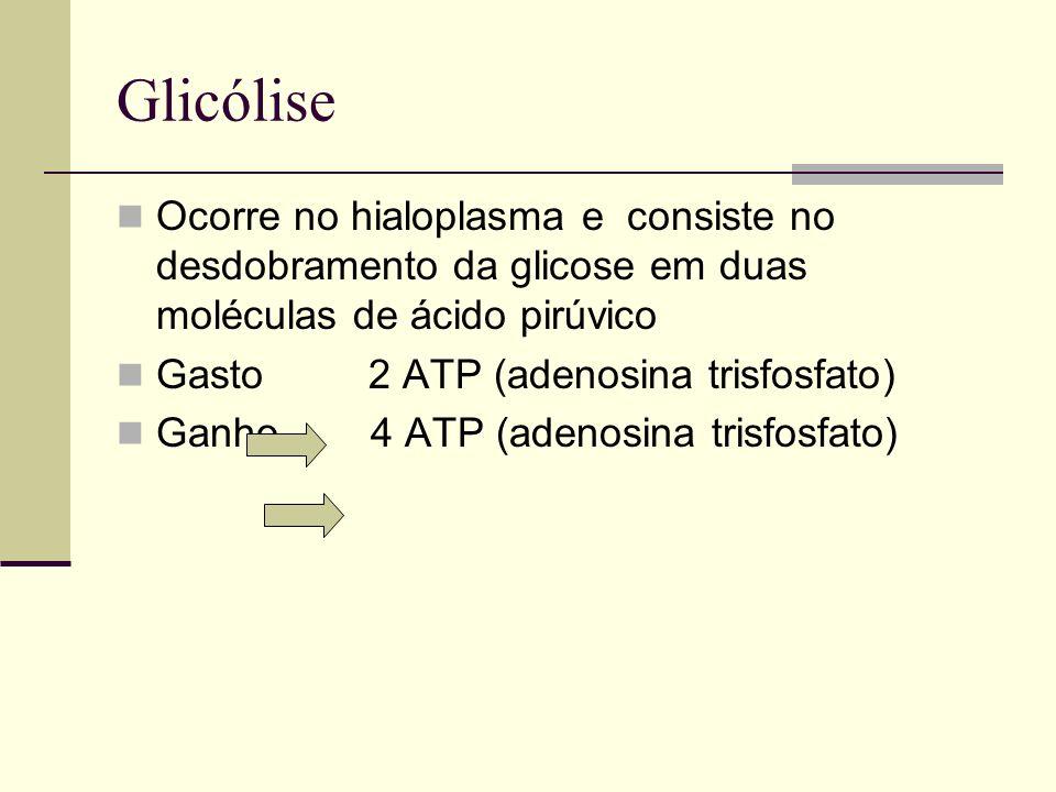Glicólise Ocorre no hialoplasma e consiste no desdobramento da glicose em duas moléculas de ácido pirúvico Gasto 2 ATP (adenosina trisfosfato) Ganho 4
