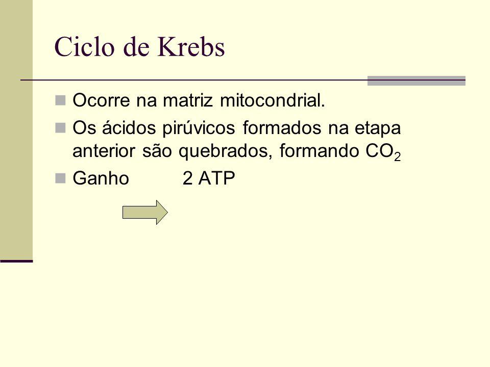 Ciclo de Krebs Ocorre na matriz mitocondrial. Os ácidos pirúvicos formados na etapa anterior são quebrados, formando CO 2 Ganho 2 ATP