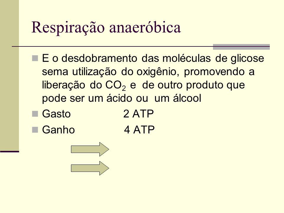 Respiração anaeróbica E o desdobramento das moléculas de glicose sema utilização do oxigênio, promovendo a liberação do CO 2 e de outro produto que po