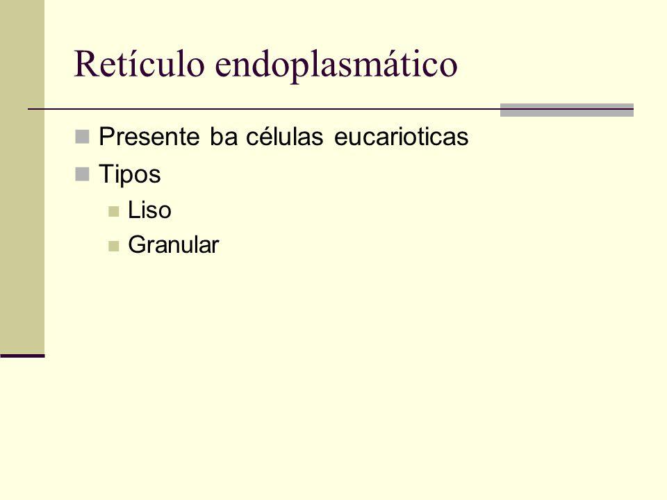 Retículo endoplasmático Presente ba células eucarioticas Tipos Liso Granular