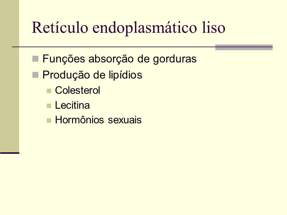 Retículo endoplasmático liso Funções absorção de gorduras Produção de lipídios Colesterol Lecitina Hormônios sexuais