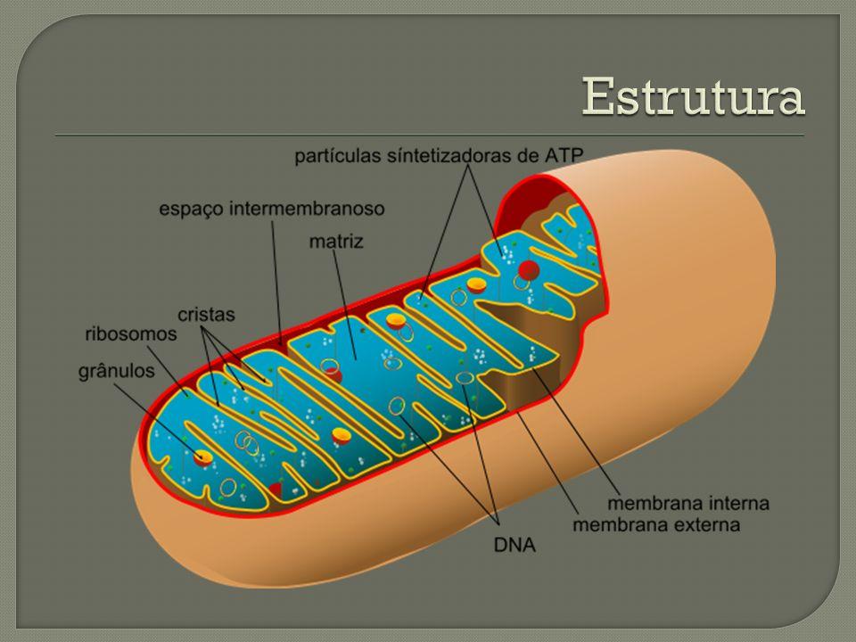 Pode ser: Aeróbica – Ocorre na presença de oxigênio Ex: Ciclo de Krebs e Cadeia respiratória Anaeróbica – Ocorre na ausência de oxigênio Ex: Fermentação e Glicólise