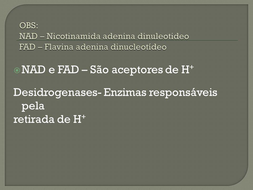 NAD e FAD – São aceptores de H + Desidrogenases- Enzimas responsáveis pela retirada de H +