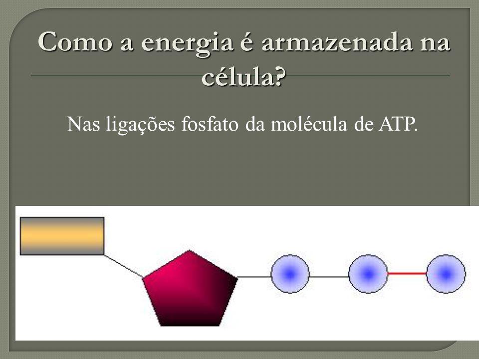 Formada pela união de uma adenina e uma ribose aderida a três radicais fosfato