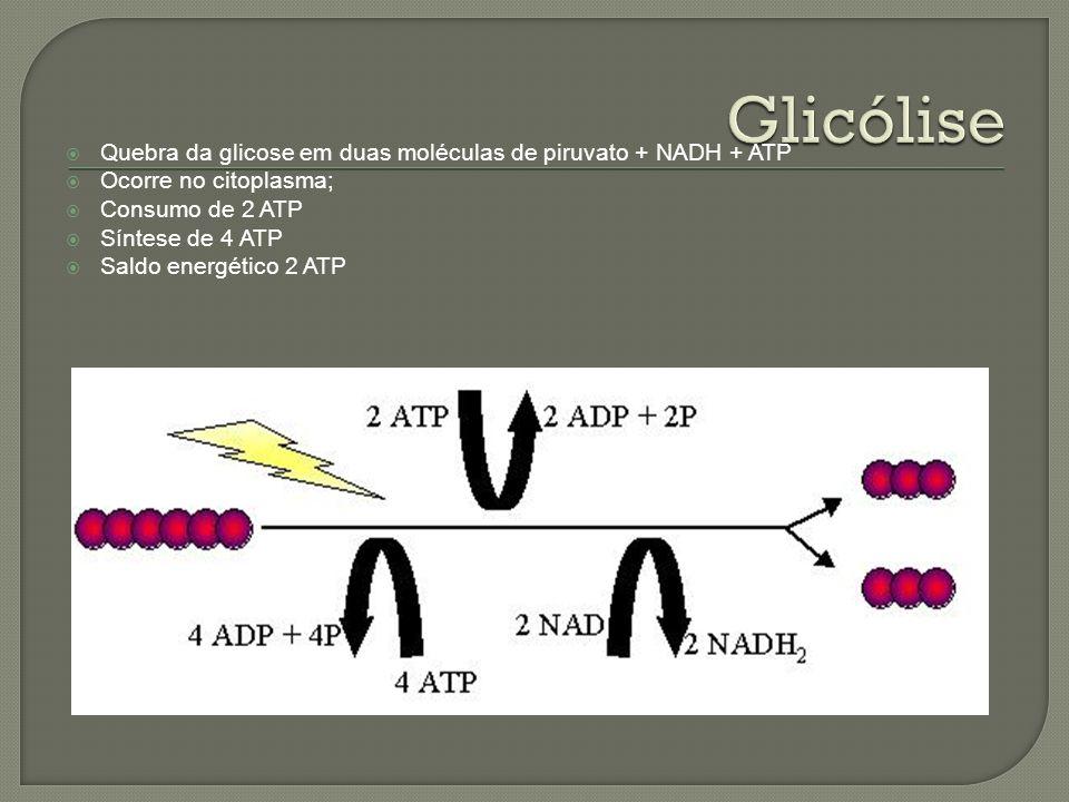 Quebra da glicose em duas moléculas de piruvato + NADH + ATP Ocorre no citoplasma; Consumo de 2 ATP Síntese de 4 ATP Saldo energético 2 ATP