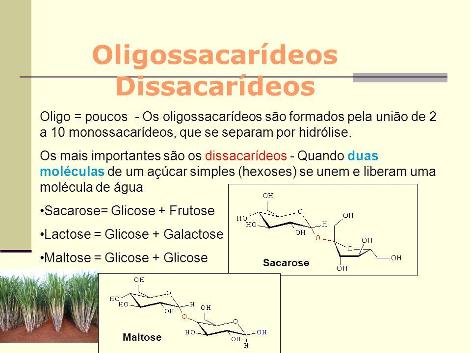 Oligossacarídeos Dissacarídeos Oligo = poucos - Os oligossacarídeos são formados pela união de 2 a 10 monossacarídeos, que se separam por hidrólise. O
