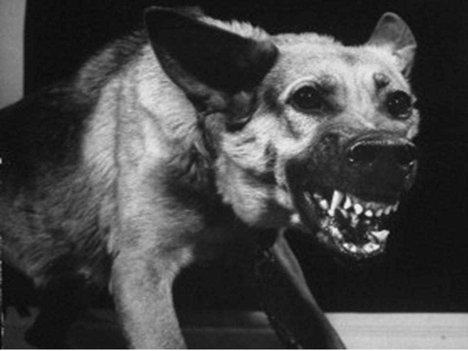 RAIVA OU HIDROFOBIA TRANSMISSÃO Mordidas de animais contaminados SINTOMAS Alterações respiratórias e cardíacas Afeta o SNC PROFILAXIA Vacinação de cãe