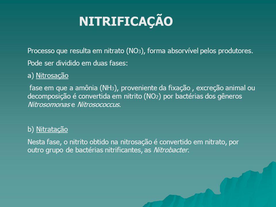 NITRIFICAÇÃO Processo que resulta em nitrato (NO 3 ), forma absorvível pelos produtores. Pode ser dividido em duas fases: a) Nitrosação fase em que a
