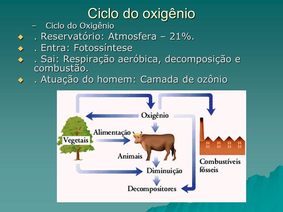 Ciclo do oxigênio –Ciclo do Oxigênio. Reservatório: Atmosfera – 21%.. Reservatório: Atmosfera – 21%.. Entra: Fotossíntese. Entra: Fotossíntese. Sai: R