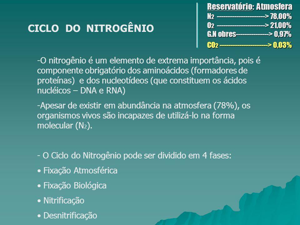 FIXAÇÃO ATMOSFÉRICA Nesse caso, o N 2 atmosférico, se houver fornecimento de grande quantidade de energia, o que ocorre em tempestades com aparecimento de relâmpagos, é fixado, transformando-se em óxidos de nitrogênio.