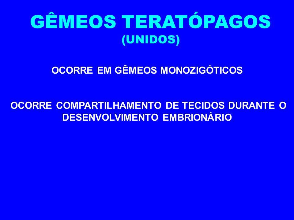 GÊMEOS UNIVITELINOS (MONOZIGÓTICOS) LIBERAÇÃO DE UM ÚNICO OVÓCITO II FECUNDADO POR UM ÚNICO ESPERMATOZÓIDE SÃO GENETICAMENTE IDÊNTICO APRESENTAM O MES