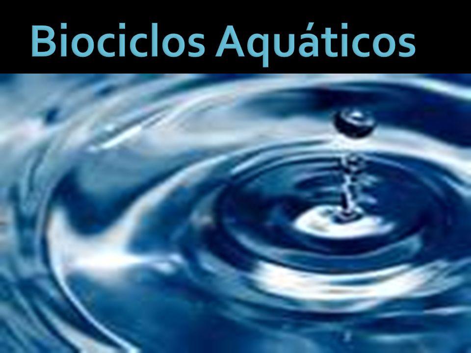 Biociclos Marinhos Os biociclos marinhos podem ser dividido em 3 partes: 1- Águas costeiras - Beira Mar e Zona Litorânea 2- Mar aberto 3 – Regiões abissais