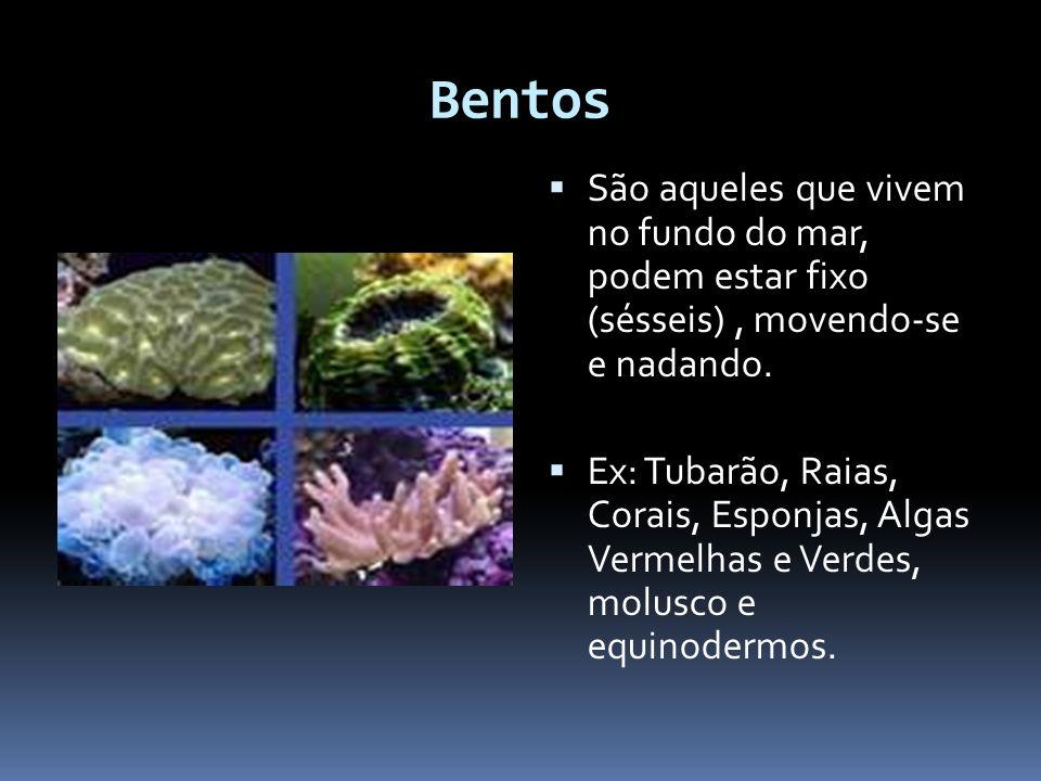 Bentos São aqueles que vivem no fundo do mar, podem estar fixo (sésseis), movendo-se e nadando. Ex: Tubarão, Raias, Corais, Esponjas, Algas Vermelhas