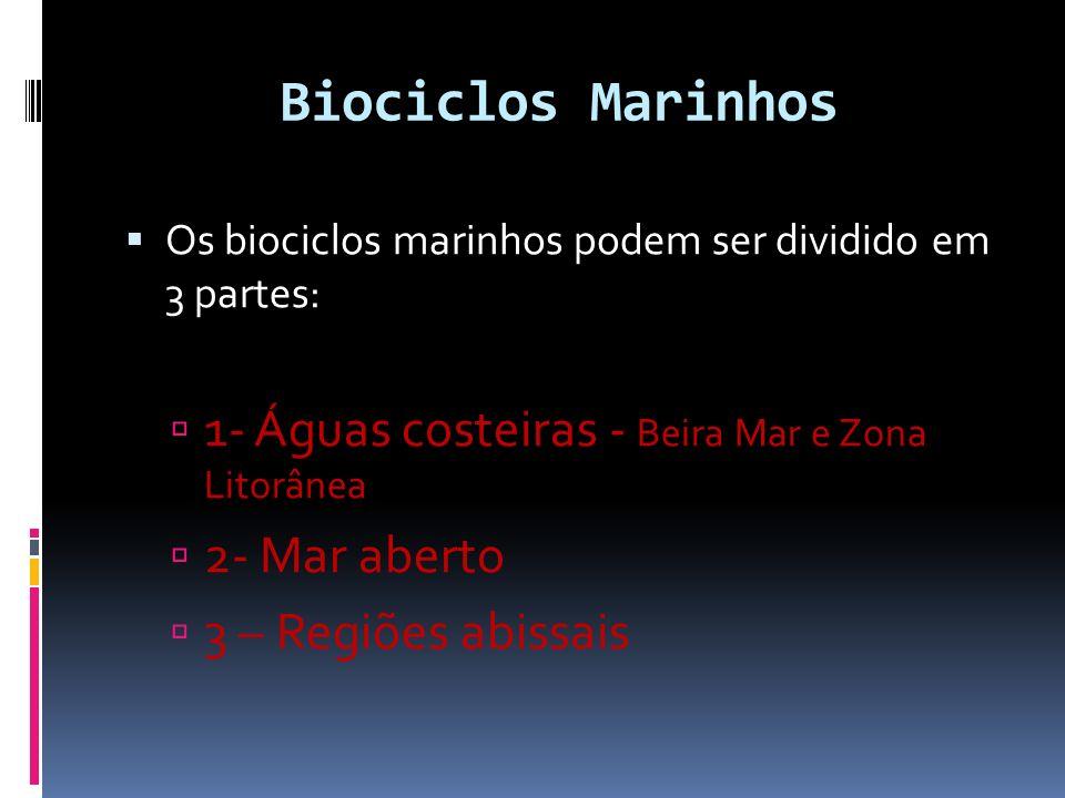 Biociclos Marinhos Os biociclos marinhos podem ser dividido em 3 partes: 1- Águas costeiras - Beira Mar e Zona Litorânea 2- Mar aberto 3 – Regiões abi
