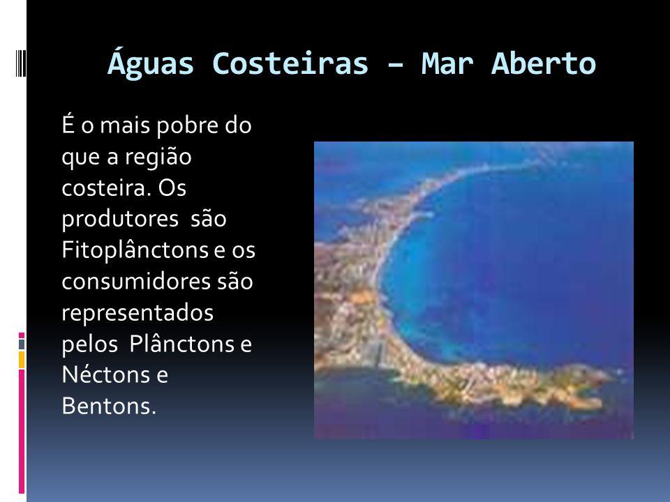 Águas Costeiras – Mar Aberto É o mais pobre do que a região costeira. Os produtores são Fitoplânctons e os consumidores são representados pelos Plânct