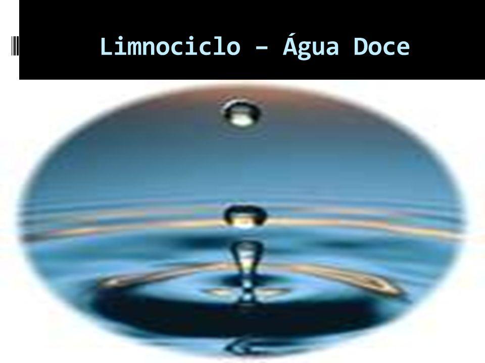 Limnociclo – Água Doce