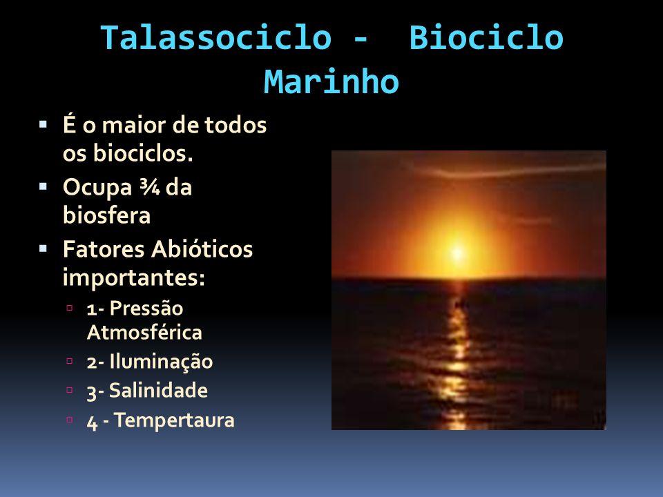 Talassociclo - Biociclo Marinho É o maior de todos os biociclos. Ocupa ¾ da biosfera Fatores Abióticos importantes: 1- Pressão Atmosférica 2- Iluminaç