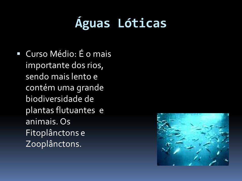 Águas Lóticas Curso Médio: É o mais importante dos rios, sendo mais lento e contém uma grande biodiversidade de plantas flutuantes e animais. Os Fitop