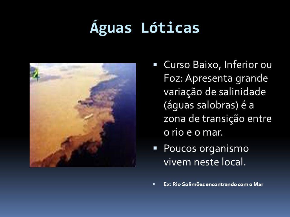Águas Lóticas Curso Baixo, Inferior ou Foz: Apresenta grande variação de salinidade (águas salobras) é a zona de transição entre o rio e o mar. Poucos