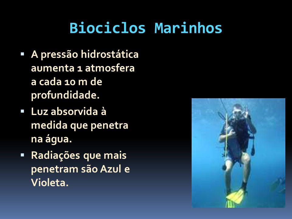 Biociclos Marinhos A pressão hidrostática aumenta 1 atmosfera a cada 10 m de profundidade. Luz absorvida à medida que penetra na água. Radiações que m
