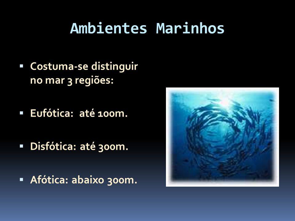 Ambientes Marinhos Costuma-se distinguir no mar 3 regiões: Eufótica: até 100m. Disfótica: até 300m. Afótica: abaixo 300m.