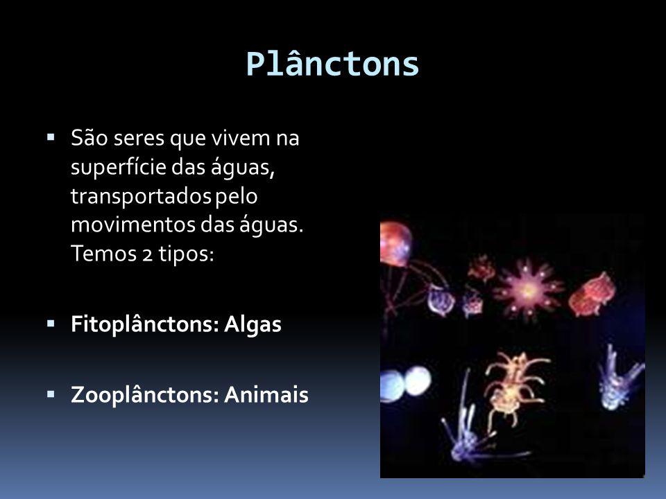 Plânctons São seres que vivem na superfície das águas, transportados pelo movimentos das águas. Temos 2 tipos: Fitoplânctons: Algas Zooplânctons: Anim