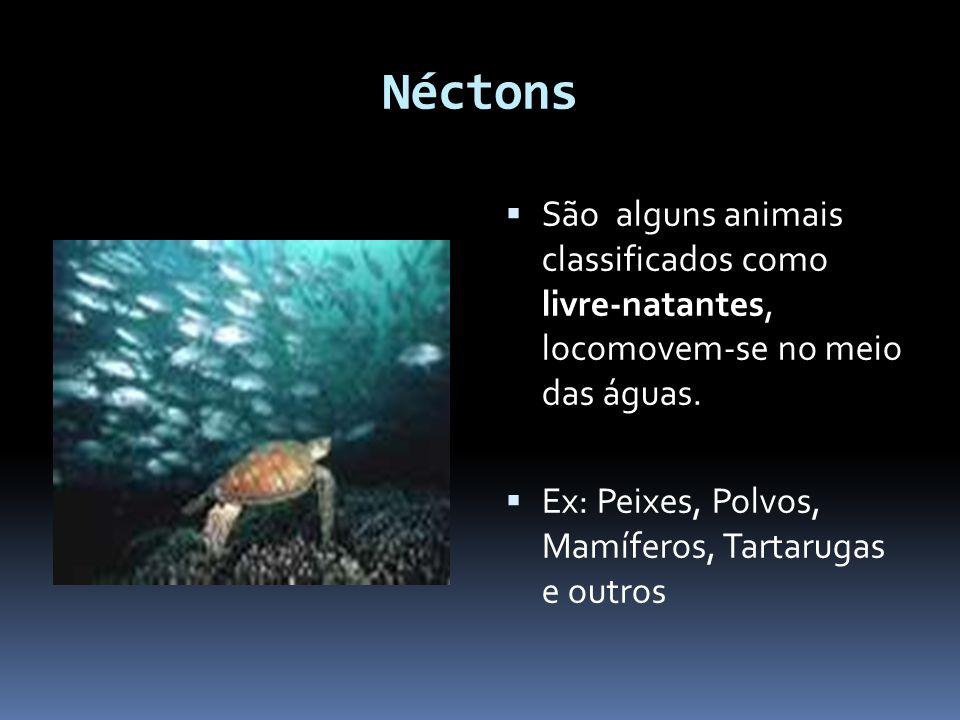 Néctons São alguns animais classificados como livre-natantes, locomovem-se no meio das águas. Ex: Peixes, Polvos, Mamíferos, Tartarugas e outros