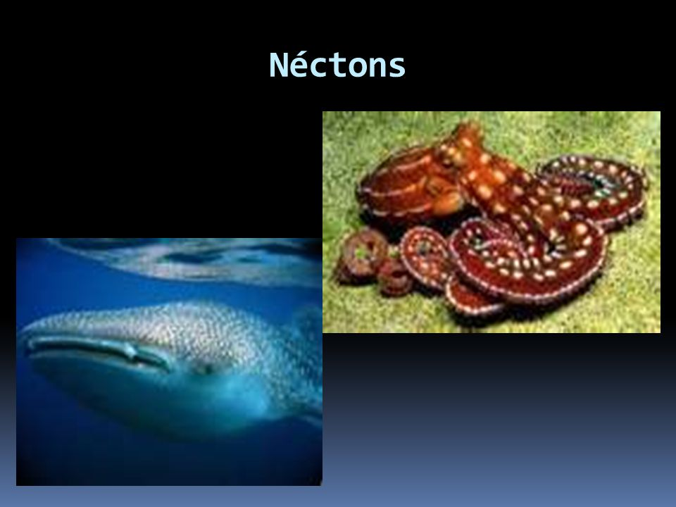 Bentos São aqueles que vivem no fundo do mar, podem estar fixo (sésseis), movendo-se e nadando.