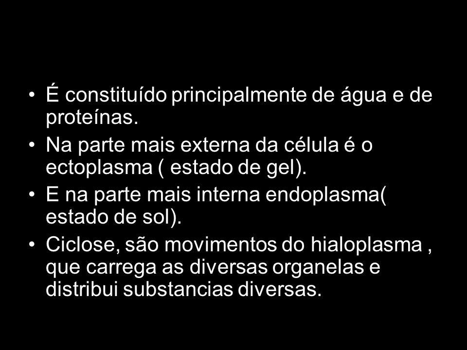 Citoesqueleto: microtubulos
