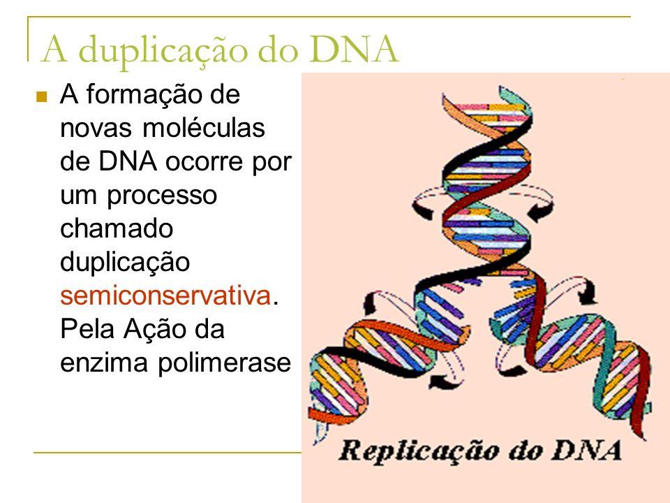 A duplicação do DNA A formação de novas moléculas de DNA ocorre por um processo chamado duplicação semiconservativa. Pela Ação da enzima polimerase