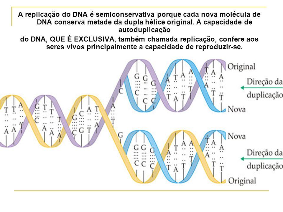 A replicação do DNA é semiconservativa porque cada nova molécula de DNA conserva metade da dupla hélice original. A capacidade de autoduplicação do DN