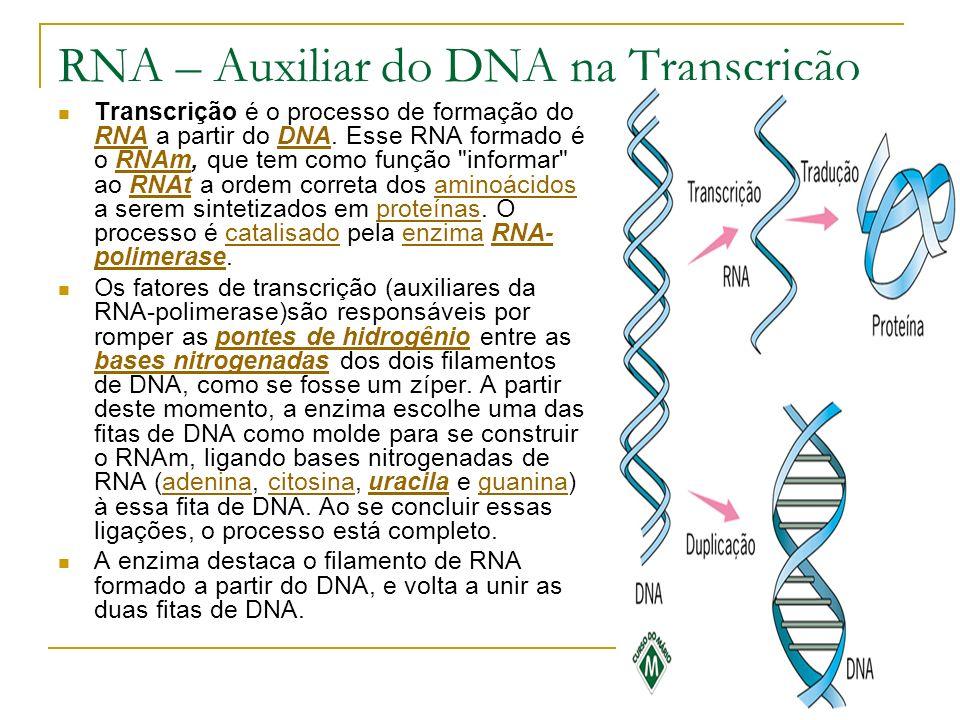 RNA – Auxiliar do DNA na Transcrição Transcrição é o processo de formação do RNA a partir do DNA. Esse RNA formado é o RNAm, que tem como função