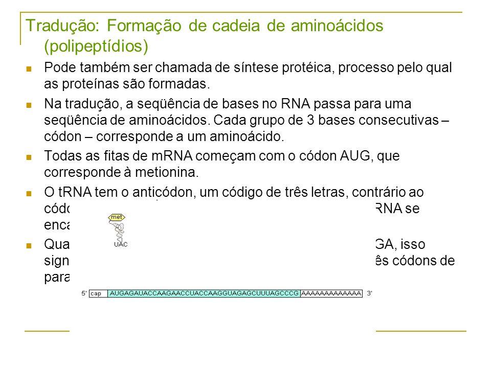 Tradução: Formação de cadeia de aminoácidos (polipeptídios) Pode também ser chamada de síntese protéica, processo pelo qual as proteínas são formadas.