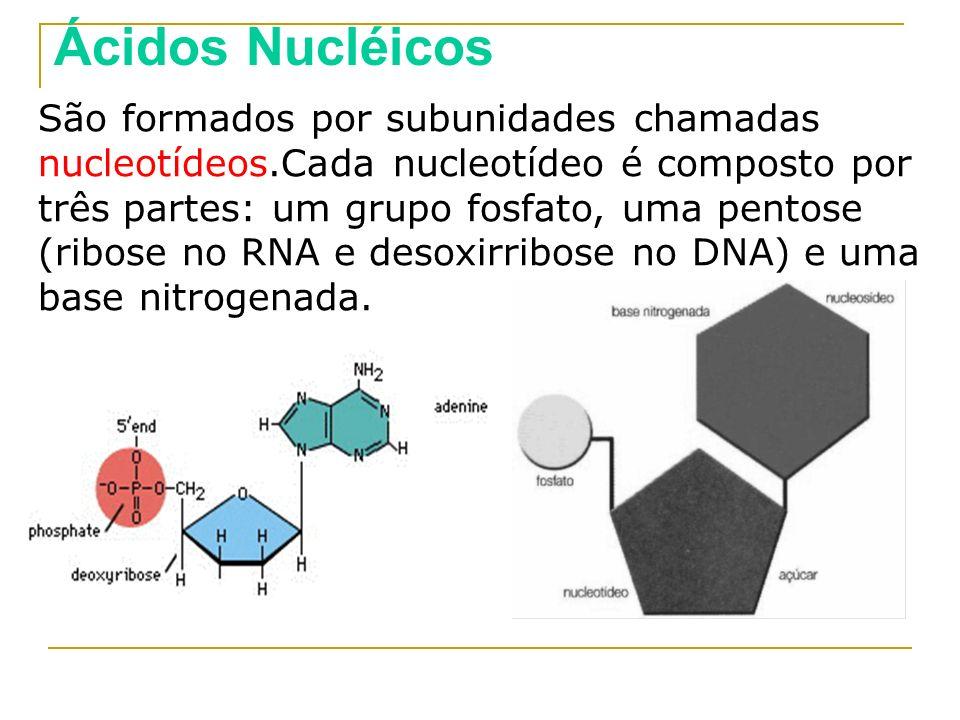 São formados por subunidades chamadas nucleotídeos.Cada nucleotídeo é composto por três partes: um grupo fosfato, uma pentose (ribose no RNA e desoxir