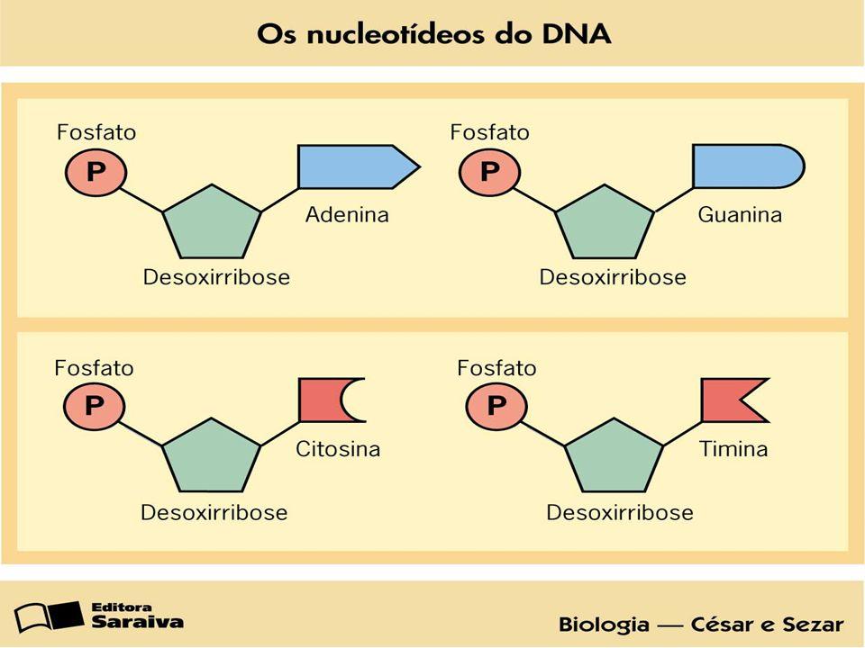 RNA – controle da síntese de proteínas Interpreta e executa a informação do DNA.