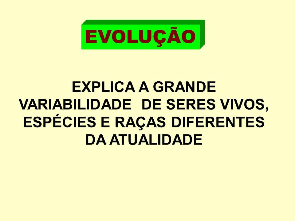 EXPLICA A GRANDE VARIABILIDADE DE SERES VIVOS, ESPÉCIES E RAÇAS DIFERENTES DA ATUALIDADE EVOLUÇÃO