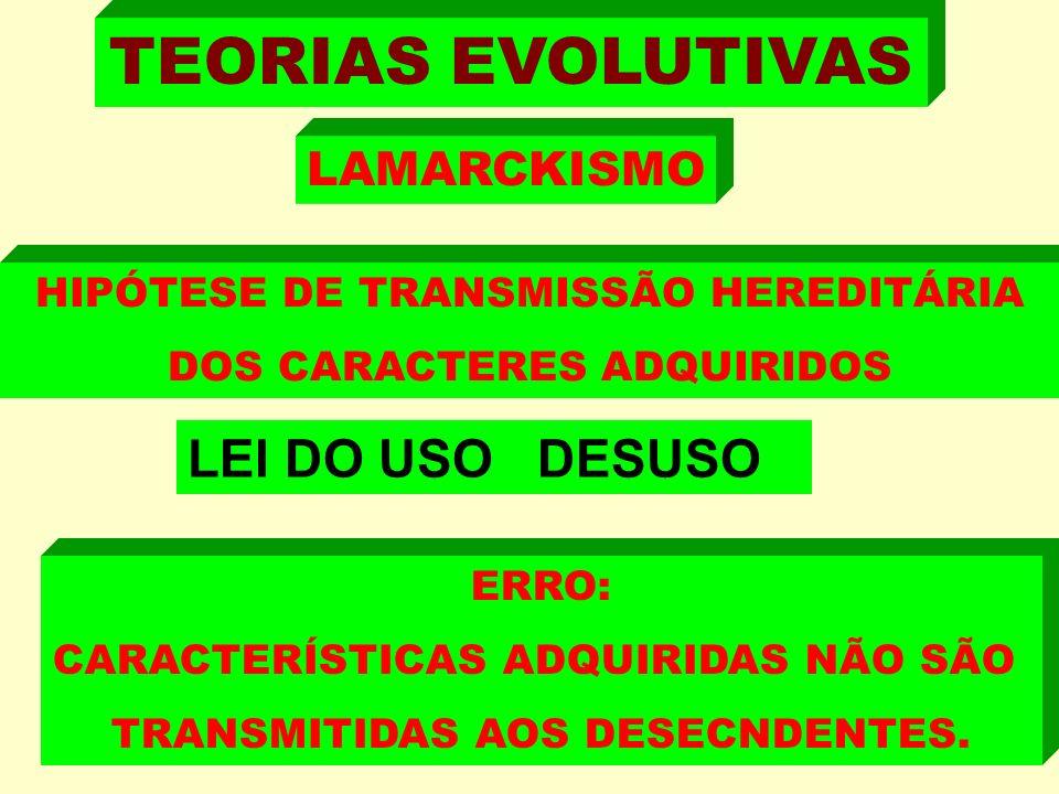 TEORIAS EVOLUTIVAS HIPÓTESE DE TRANSMISSÃO HEREDITÁRIA DOS CARACTERES ADQUIRIDOS LEI DO USO DESUSO ERRO: CARACTERÍSTICAS ADQUIRIDAS NÃO SÃO TRANSMITIDAS AOS DESECNDENTES.