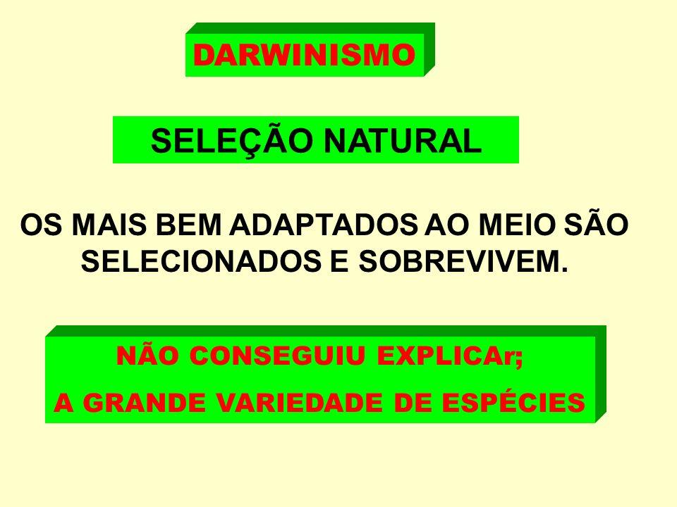 DARWINISMO SELEÇÃO NATURAL OS MAIS BEM ADAPTADOS AO MEIO SÃO SELECIONADOS E SOBREVIVEM.