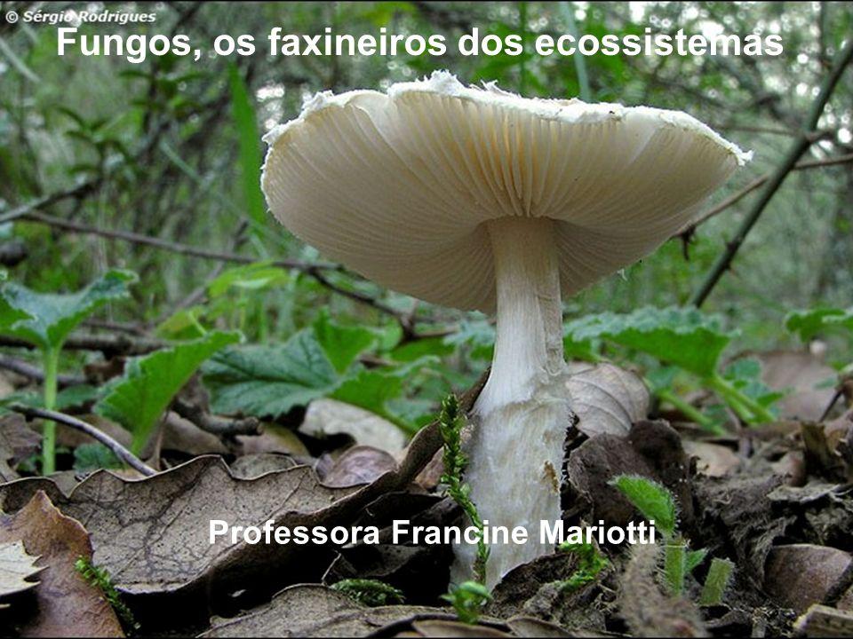 Fungos, os faxineiros dos ecossistemas Professora Francine Mariotti