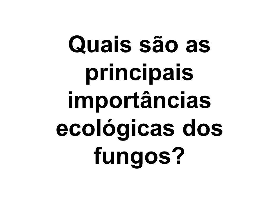 Quais são as principais importâncias ecológicas dos fungos?