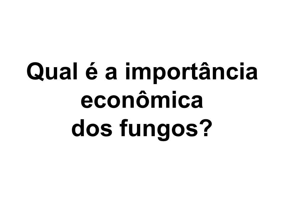 Qual é a importância econômica dos fungos?