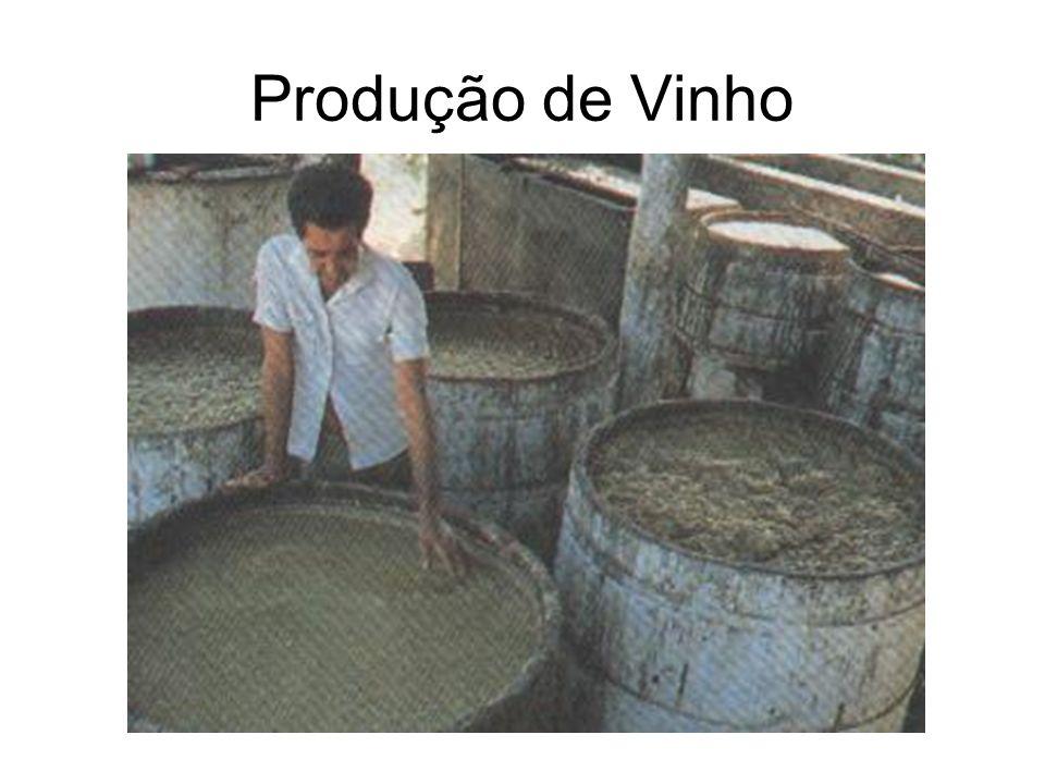 Produção de Vinho