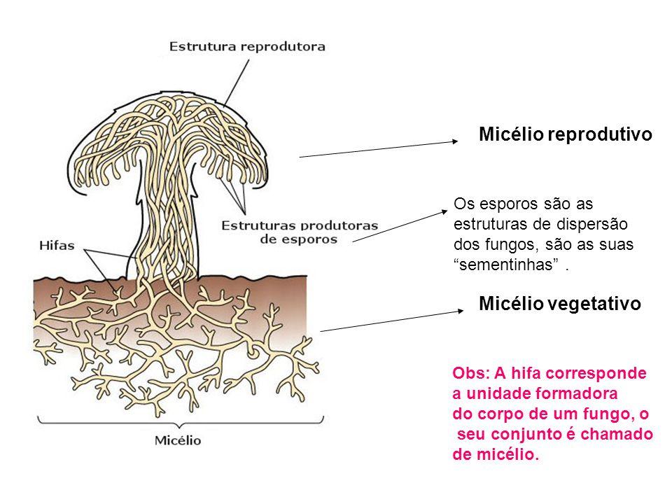 Porque os fungos mergulham em seu alimento?