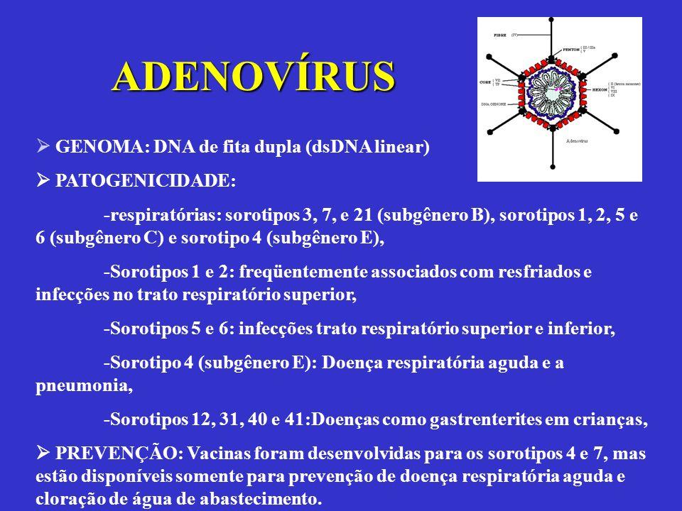 GENOMA: DNA de fita dupla (dsDNA linear) PATOGENICIDADE: -respiratórias: sorotipos 3, 7, e 21 (subgênero B), sorotipos 1, 2, 5 e 6 (subgênero C) e sor