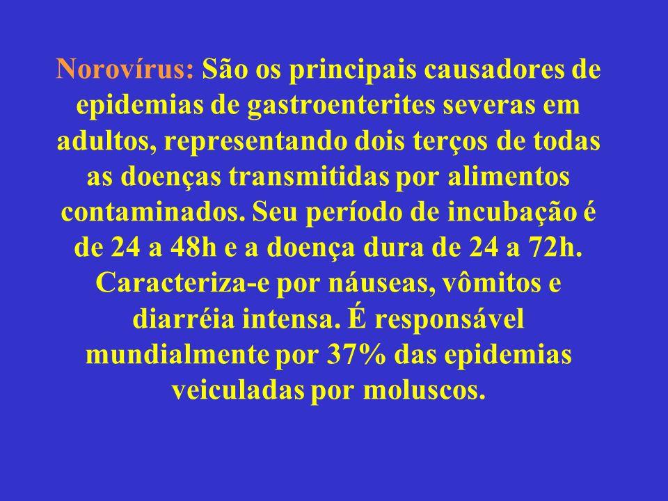 Norovírus: São os principais causadores de epidemias de gastroenterites severas em adultos, representando dois terços de todas as doenças transmitidas