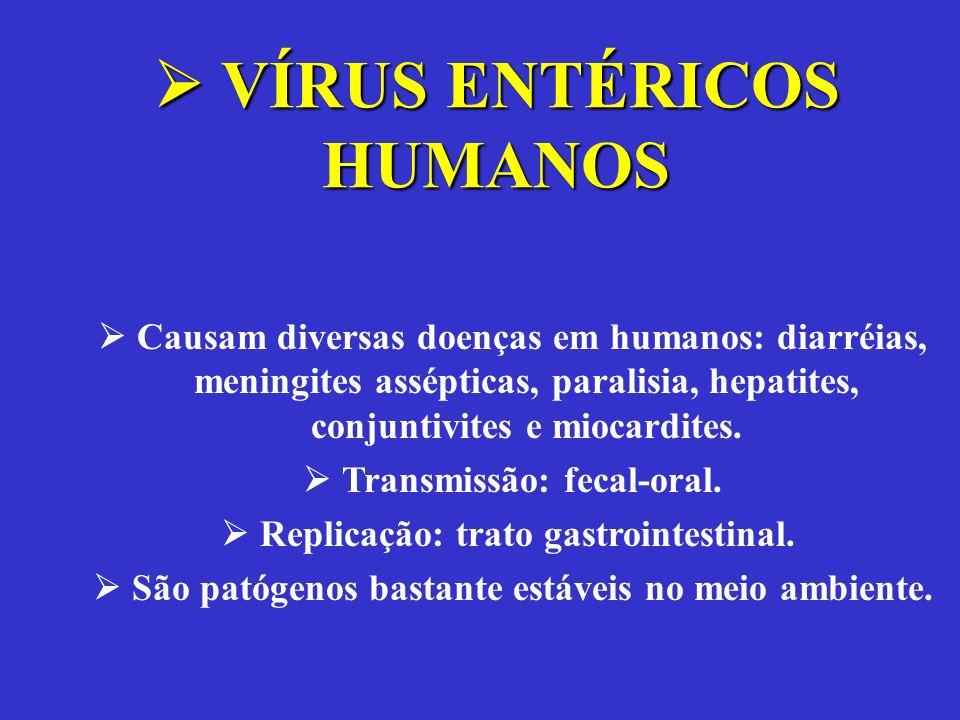 Causam diversas doenças em humanos: diarréias, meningites assépticas, paralisia, hepatites, conjuntivites e miocardites. Transmissão: fecal-oral. Repl