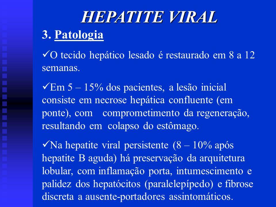 HEPATITE VIRAL 3. Patologia O tecido hepático lesado é restaurado em 8 a 12 semanas. Em 5 – 15% dos pacientes, a lesão inicial consiste em necrose hep
