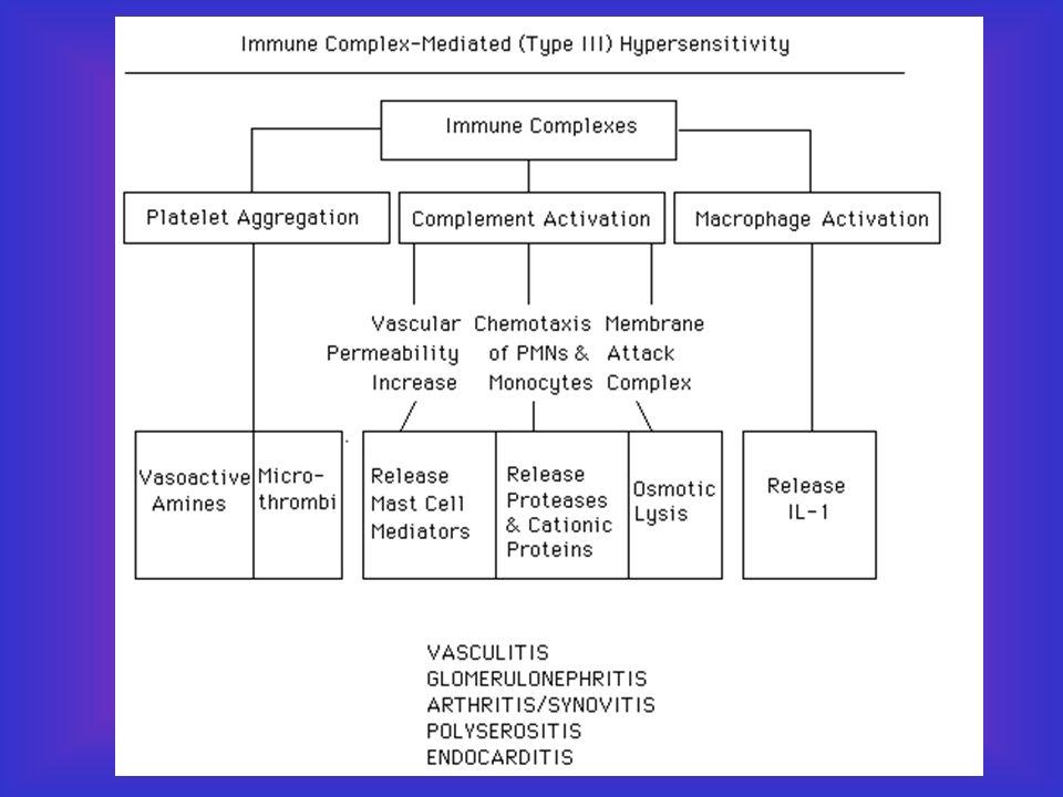 Tipo III Deposição de imuno-complexos Tipo III